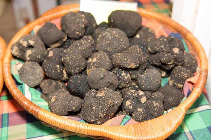 Truffle is the fruiting body of a subterranean. Ascomycete fungus, predominantly one of the many species of the genus Tuber italy royalty free stock photo