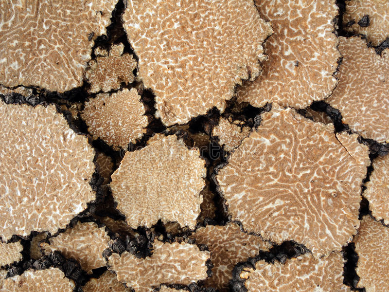 Truffle's texture royalty free stock photography