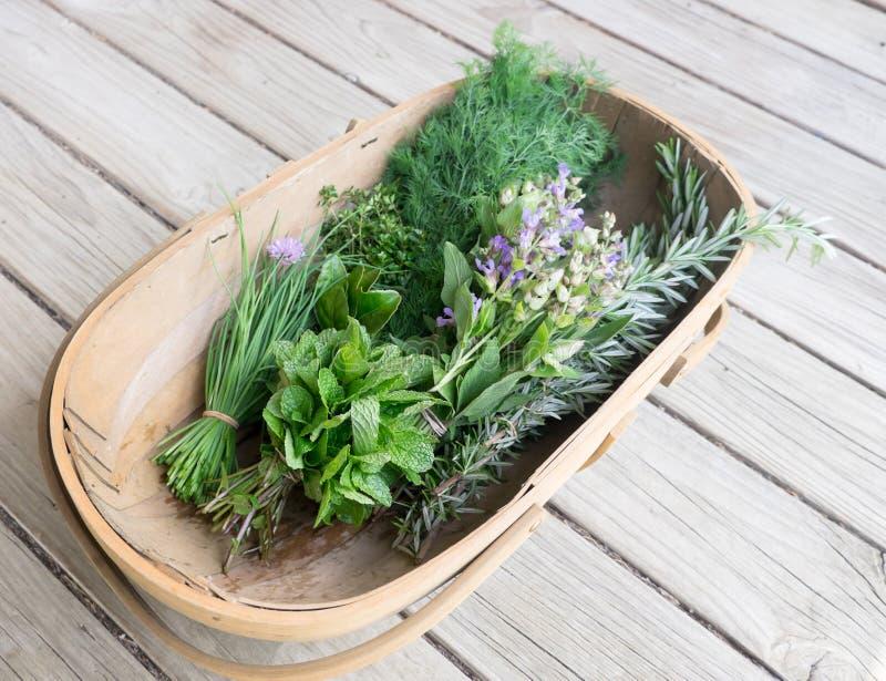 Trug del jardín de hierbas orgánicas frescas en cubierta de madera: cebolletas, menta, foto de archivo libre de regalías