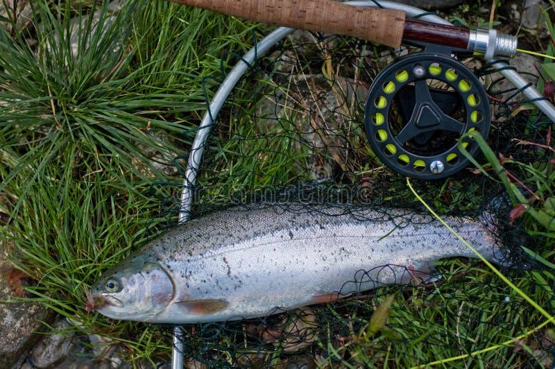 Truite arc-en-ciel : pêche de mouche photographie stock