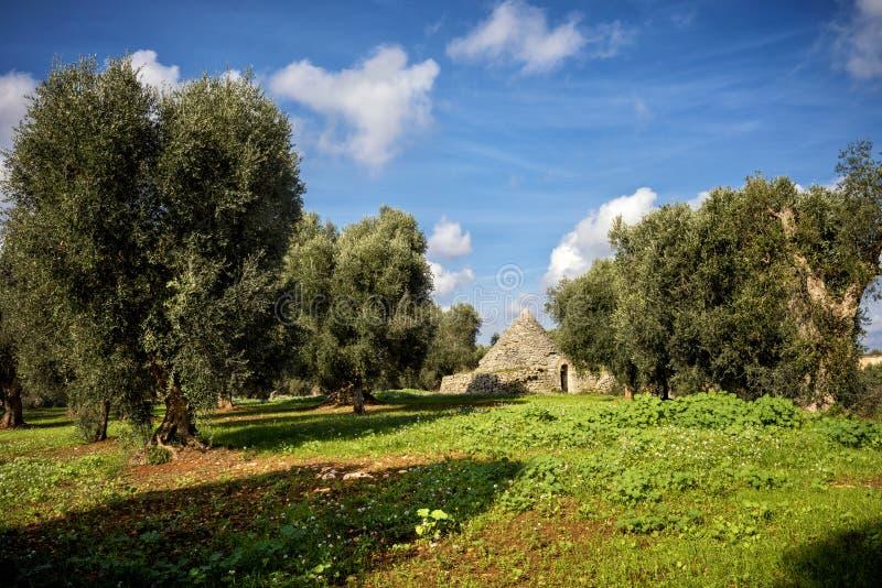 Trulli con la arboleda verde oliva Val d 'Itria - Puglia Apulia - Italia imágenes de archivo libres de regalías