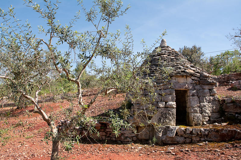 Trulli country. Abandoned and olive tree royalty free stock images