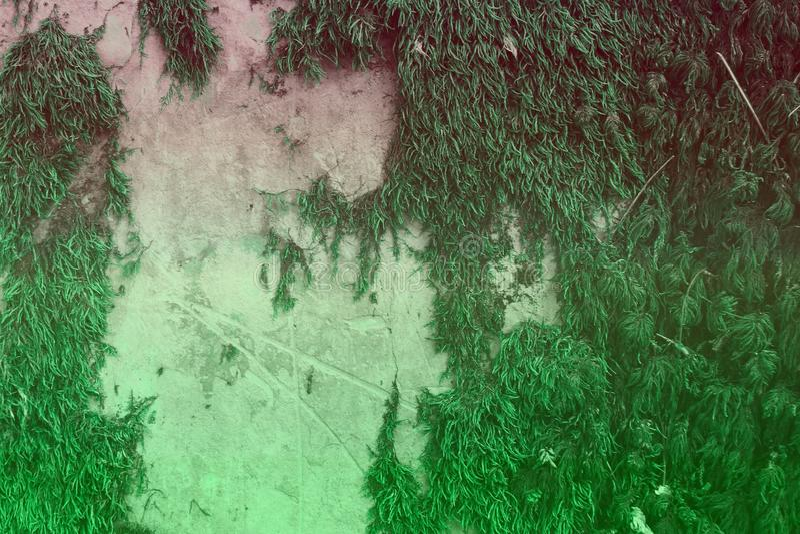 Trullo, textura cubierta de musgo sucia de la pared del castillo del diseño verde mar - fondo abstracto fantástico de la foto imagen de archivo libre de regalías
