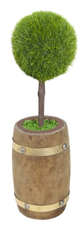 trumma träplanterad tree royaltyfria foton