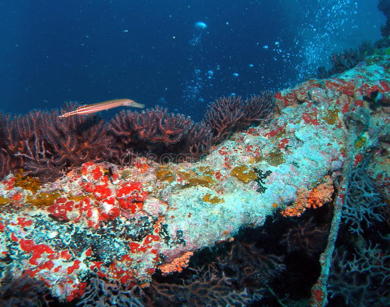 Trumpetfish stockfotografie