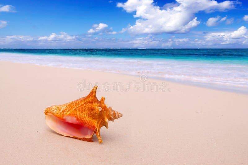 Trumpetsnäcka Shell på stranden. royaltyfria bilder