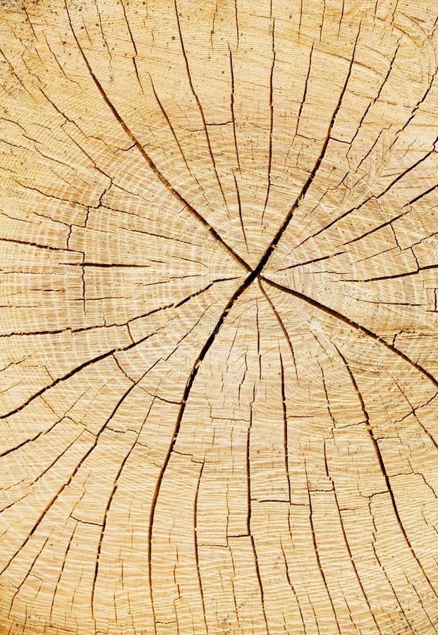 Truncated log stock image
