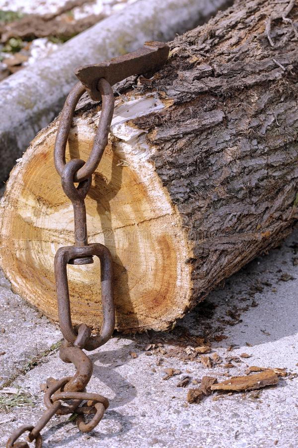 Truncated tree trunk hooked to a chain royalty free stock photography