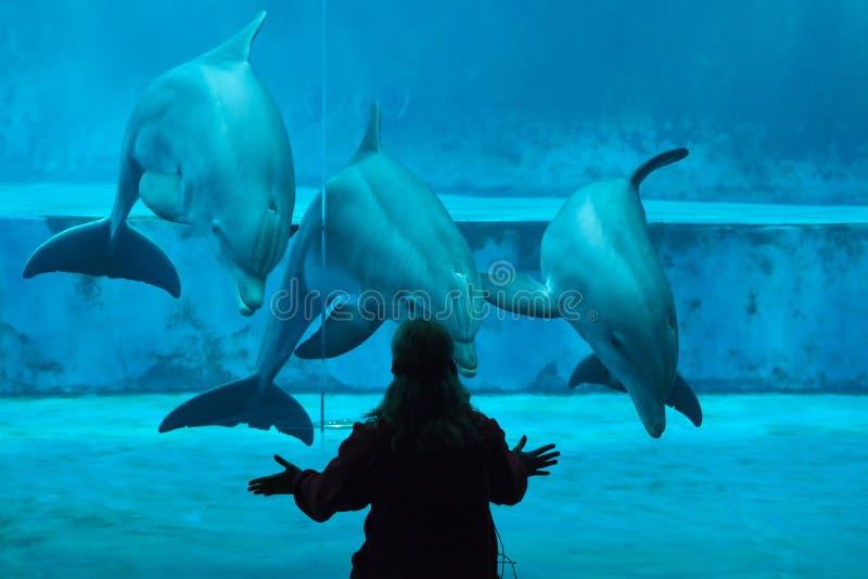 Truncatus commun de Tursiops de dauphins de bottlenose images libres de droits