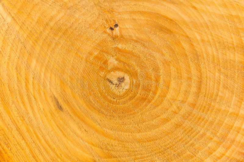 Download Trunk stock photo. Image of band, circle, step, texture - 21028350