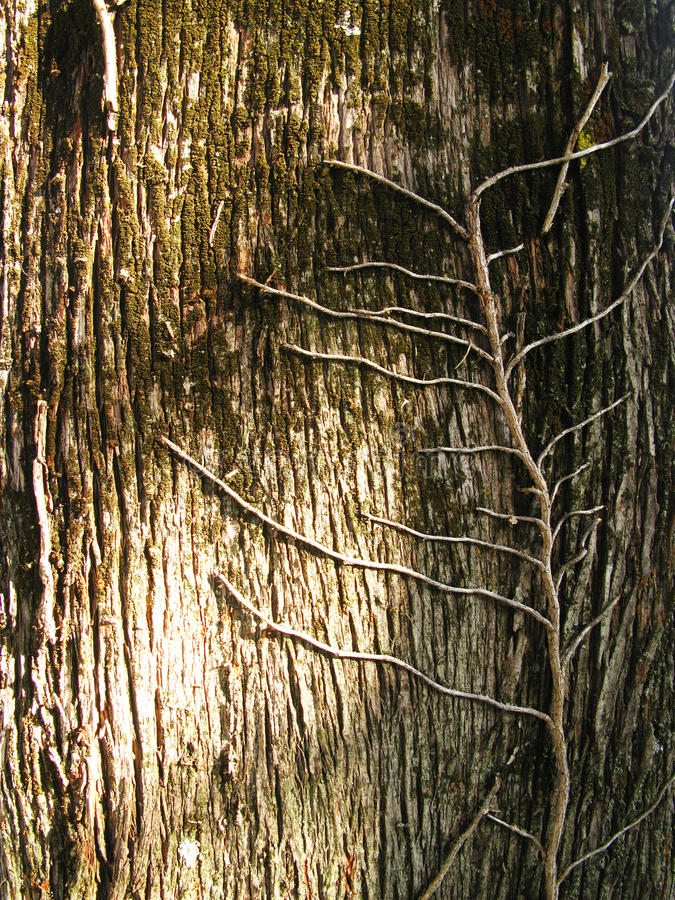 Download Trunk bark stock photo. Image of trunk, bark, nature - 11323220