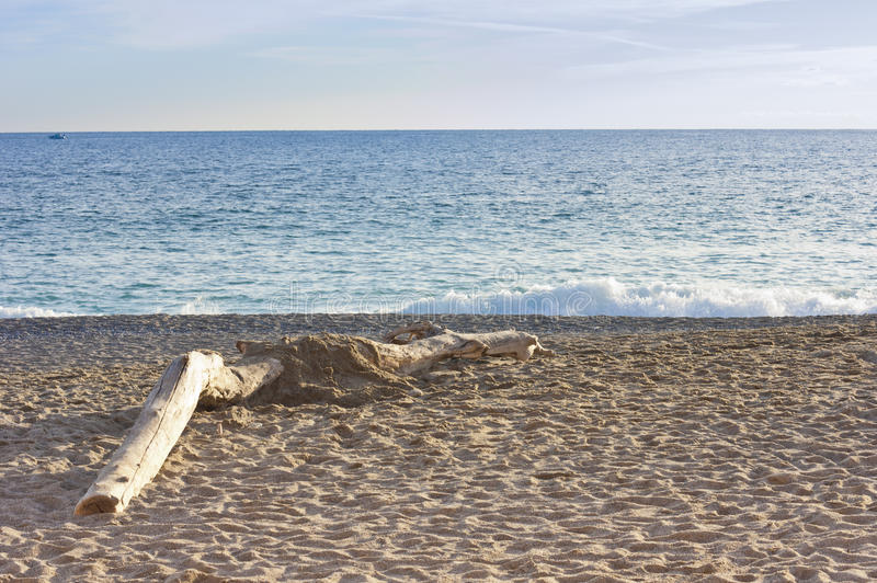 Download Trunk on the beach stock photo. Image of tranquil, seascape - 28278636