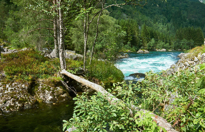 Trunk bridge over a river. Trunk laid out as a bridge to an island in the river Groensdalslona in Norway royalty free stock images