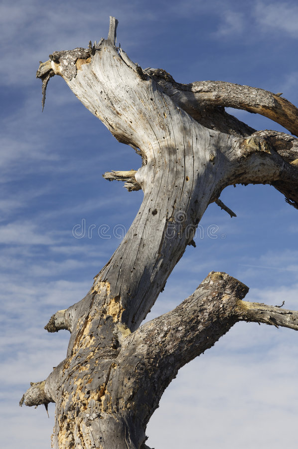 Download Trunk Of Dead Trees And Sky Stock Images - Image: 8524434