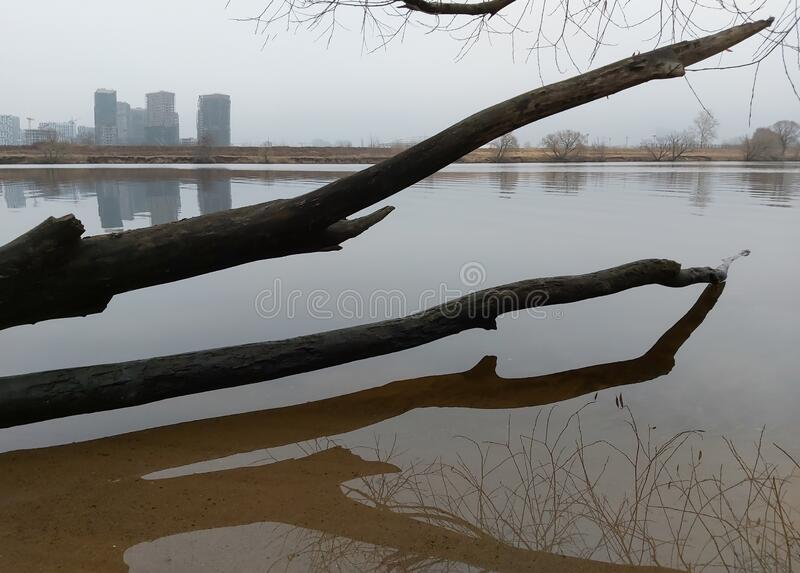 trunk of a fallen tree lies in the water and on the opposite river Bank there are city houses stock images