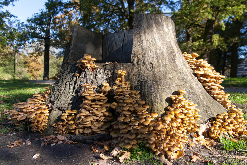 Download Trunk with mushrooms stock image. Image of trunk, gree - 28436583