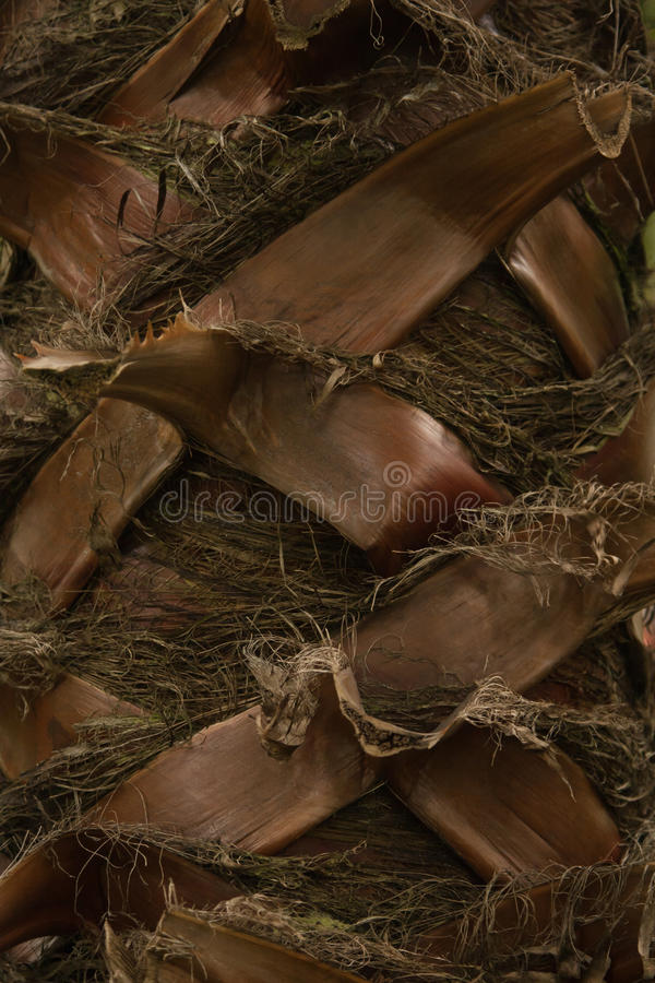 Trunk palm tree royalty free stock photos