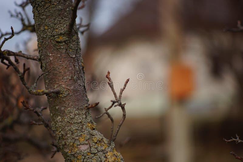 Trunk pear tree in automne garden, maison floue en arrière-plan image libre de droits