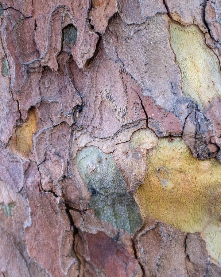 The trunk of a tree in autumn royalty free stock image