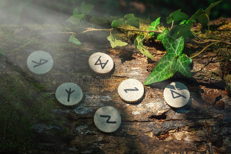 On the trunk of a tree, covered with ivy, are wooden Scandinavian runes. Mystic light. The concept of divination and esotericism. royalty free stock photos