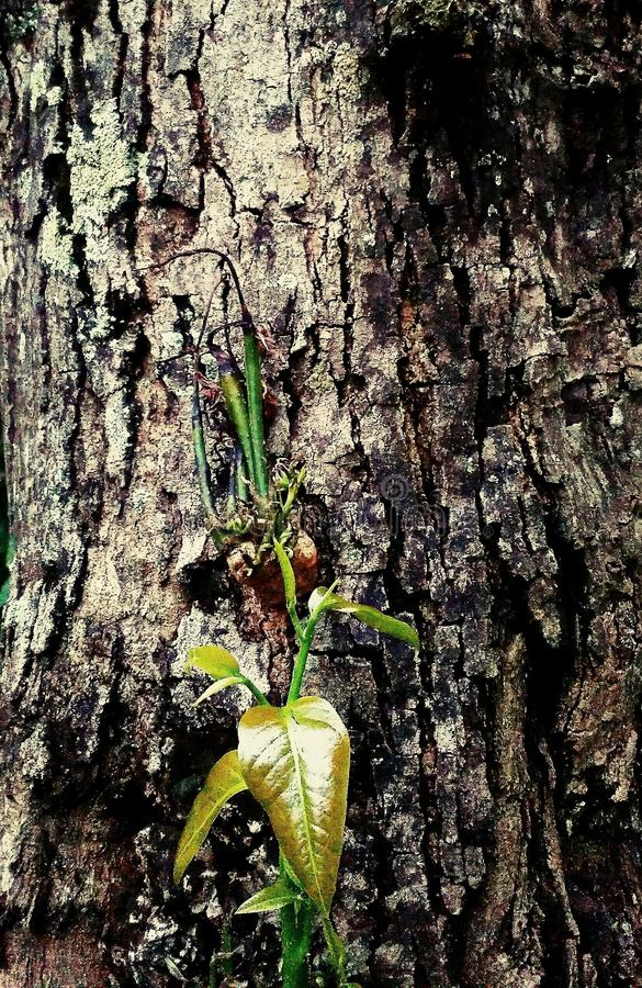 Trunk tree leave green stock photography