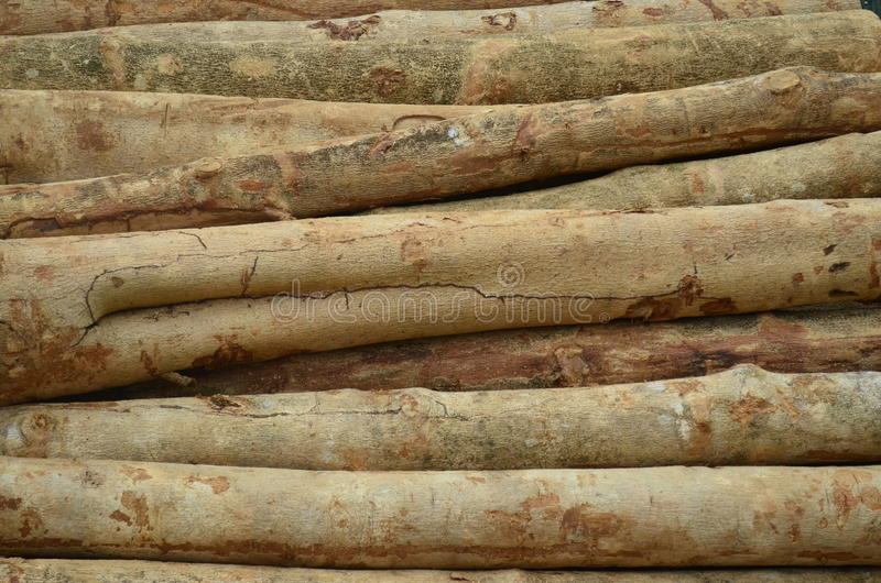 Trunk of a tree. Trunks waiting for be procesed and transformed in A panel made of wood. Forestry. Enviromental management wood used for construction stock photo