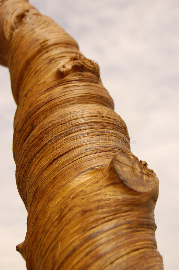 Trunk Of Wood Royalty Free Stock Image