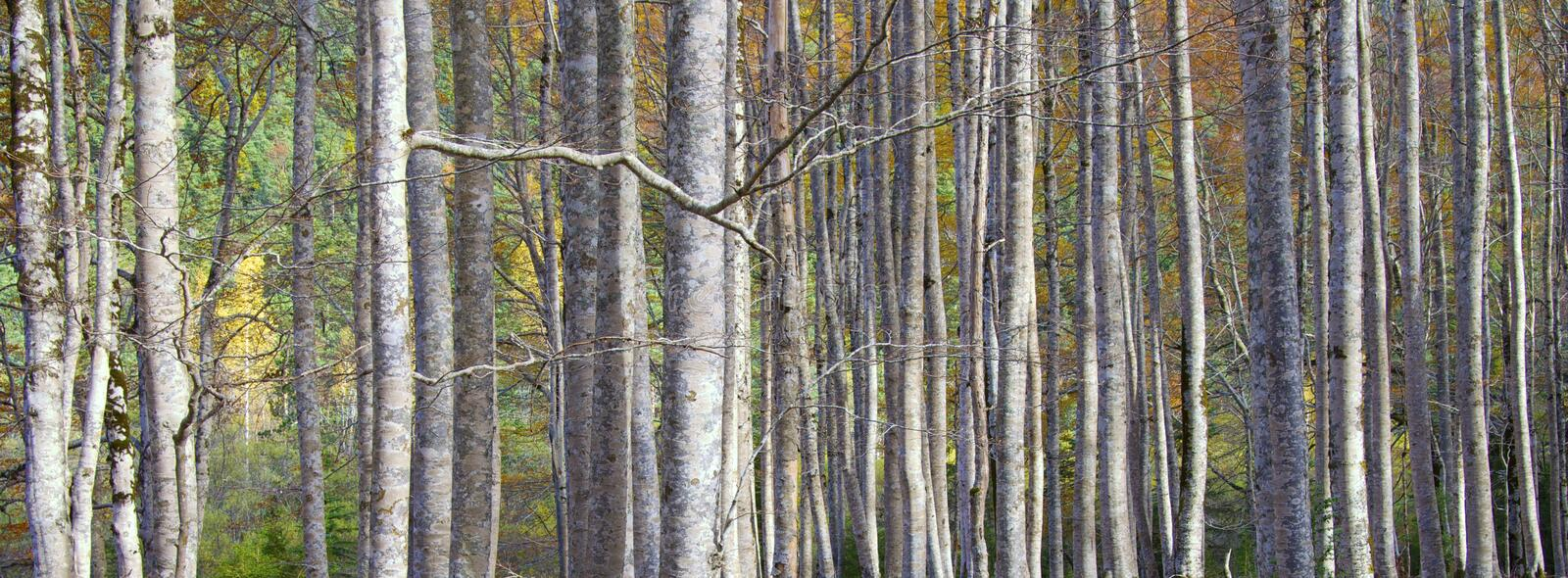 Download Trunks stock image. Image of branches, large, closeup - 17851427