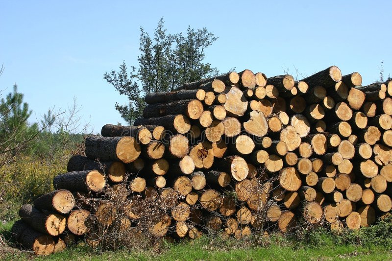 Download Trunks stock photo. Image of ecological, close, movable - 675958