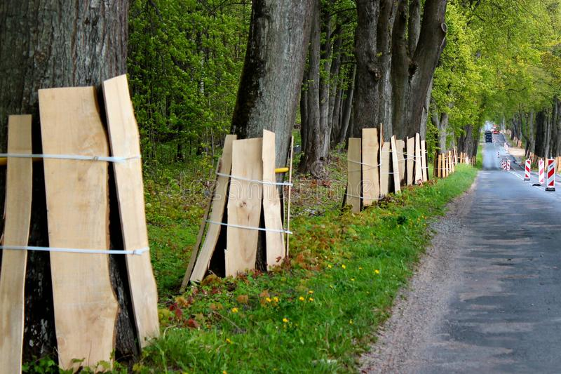 Trunks of roadside trees protected by wooden planks during a road construction.  stock photography