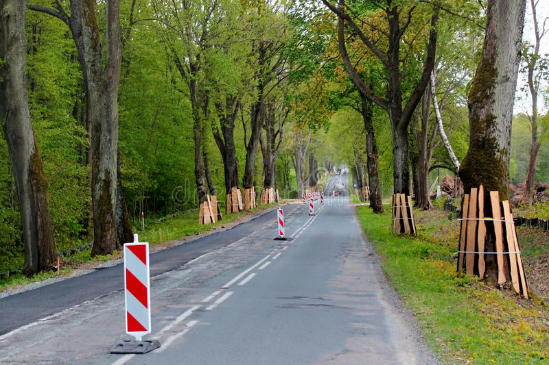 Trunks of roadside trees protected by wooden planks during a road construction.  royalty free stock images