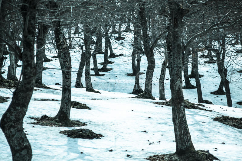 Trunks And Snow Stock Images