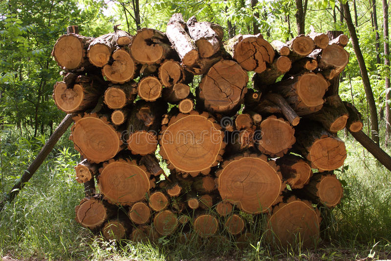 Trunks royalty free stock photo