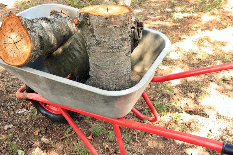 Trunks and stumps of trees in an iron cart, cut trees, garden work royalty free stock photography