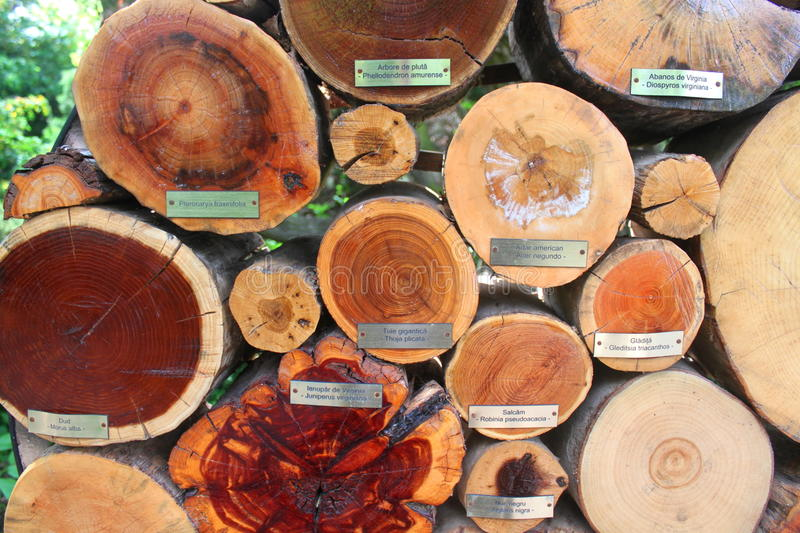 Trunks of trees cut. Representing different species in arboretum stock images
