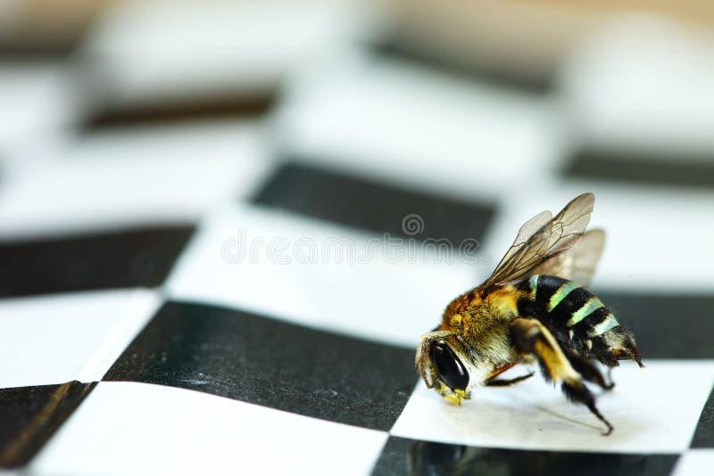 Trup pszczoły scena obraz stock