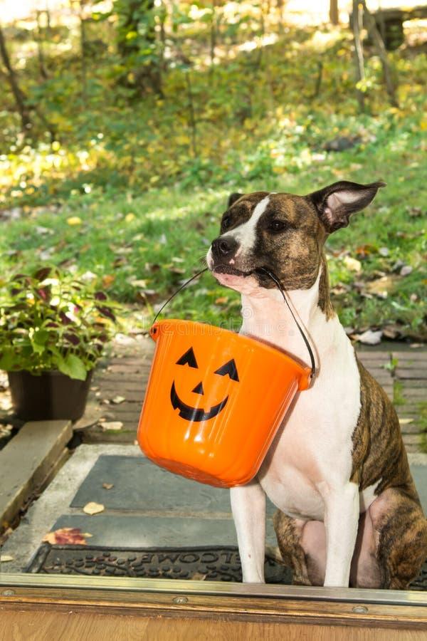 Truque bonito ou tratamento do cão fotografia de stock