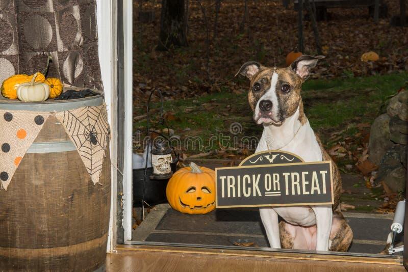 Truque bonito ou tratamento do cão imagens de stock