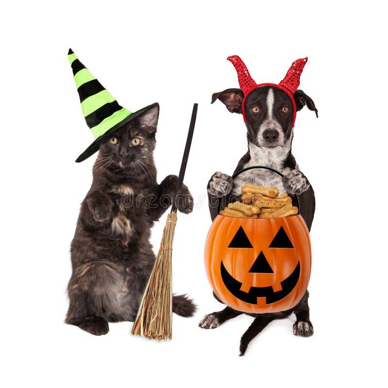 Truque-ou-tratamento do gato e do cão de Dia das Bruxas fotografia de stock
