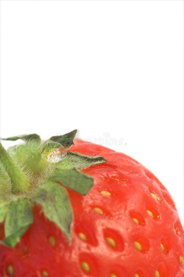truskawka zdjęcia stock
