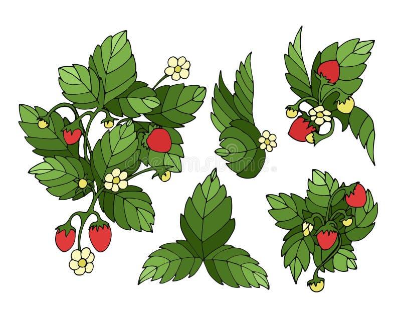 Download Truskawka set ilustracja wektor. Ilustracja złożonej z kwiat - 57669245