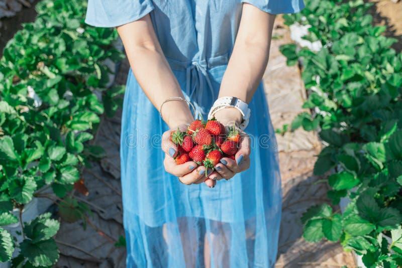 Truskawka w ręce owocowy rolnik zdjęcie stock