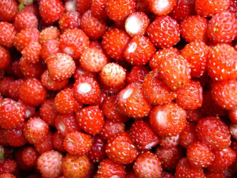 truskawki. zdjęcie royalty free