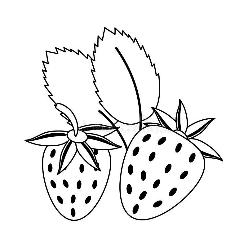 Truskawki owocowa świeża żywność w czarny i biały ilustracja wektor
