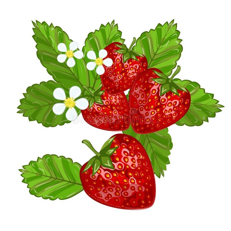 Truskawki z liśćmi ilustracyjnymi royalty ilustracja