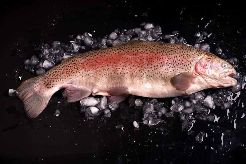 Truta arco-íris inteiramente no gelo esmagado em um fundo escuro imagem de stock royalty free