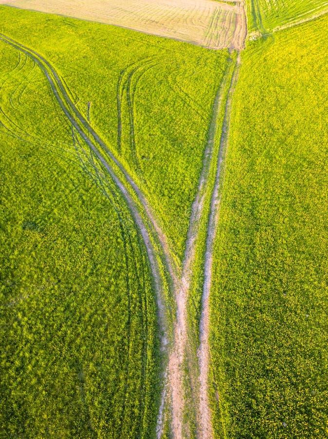 Truteń fotografia droga Między polami w Kolorowej Wczesnej wiośnie zdjęcia royalty free