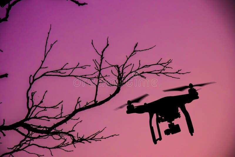 Truteń z 4K kamery lataniem zdjęcia royalty free
