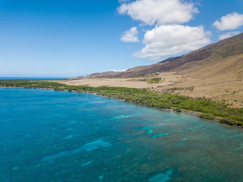 Trutnia boczny widok suchy kryształ i góry - jasne wody Lahaina Suną na wyspie Maui, Hawaje zdjęcia royalty free