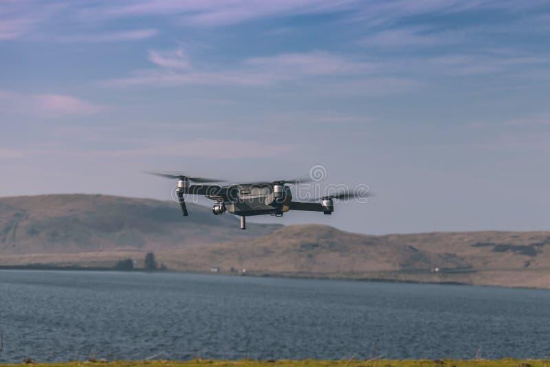 Trutnia latanie po odlota zdjęcia royalty free